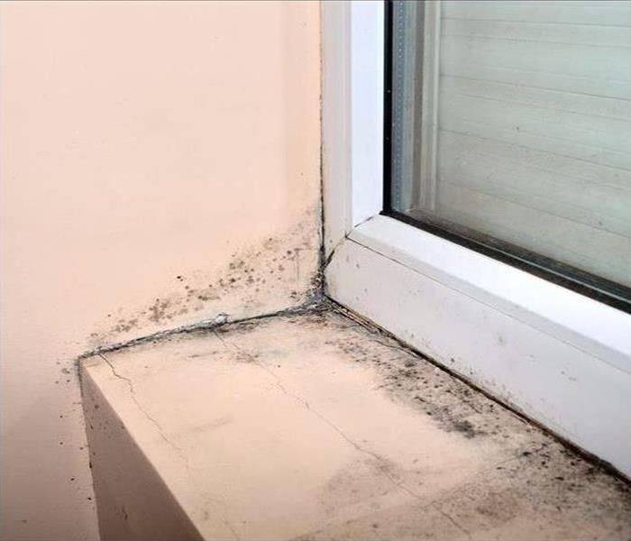 Commercial Mold Remediation In Grovetown