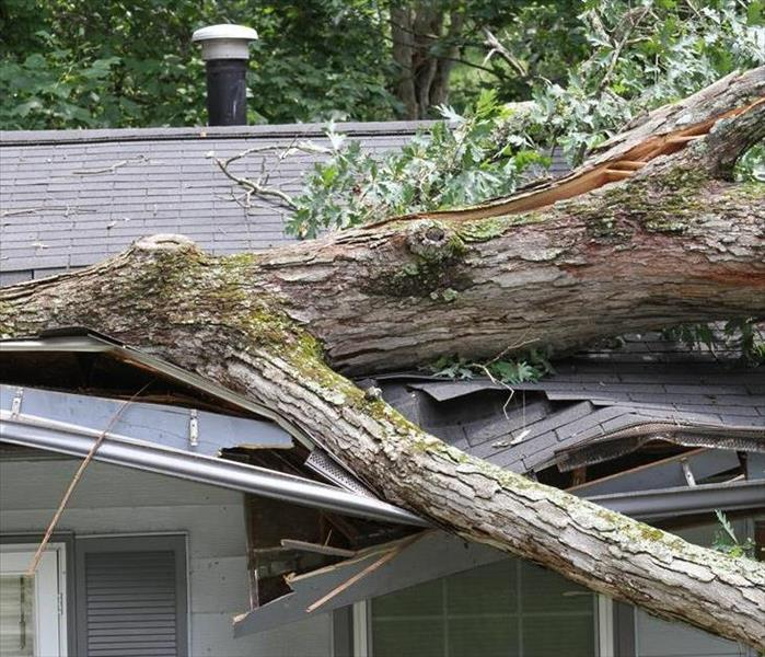 A tree laying on the roof of a home.
